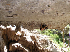 Rock Climbing Photo: Nat crushing the roof of Elephant Man