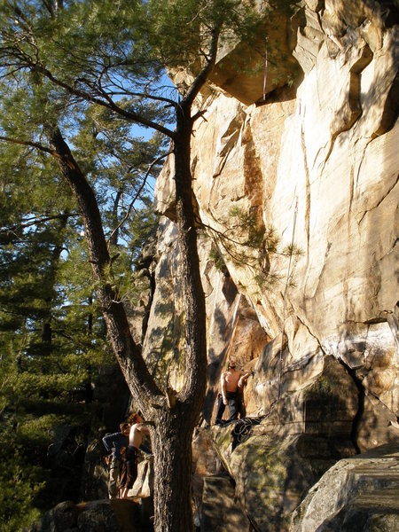 Hell Wall area, Self Mutilation is the roof, bolted slab climbs are in the notch of the tree.
