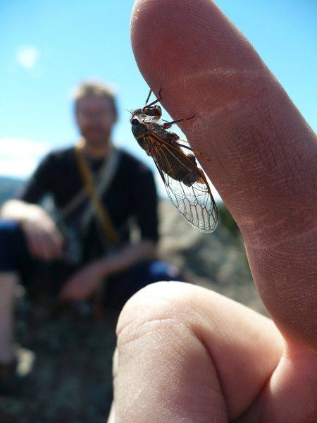 Rock Climbing Photo: Unidentified cicada on Overhanging Finger, V5