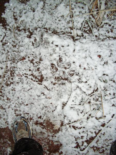Rock Climbing Photo: Cat track by near Fireblack.