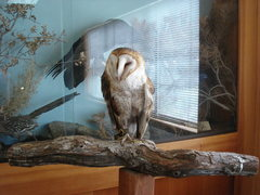 Rock Climbing Photo: Ruth the Barn Owl.