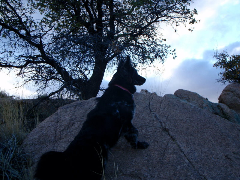 Rock Climbing Photo: Lucy guards against the savage Cochise Wilderness