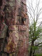 Rock Climbing Photo: Steve Z onsighting Callipigeanous.  April 09.
