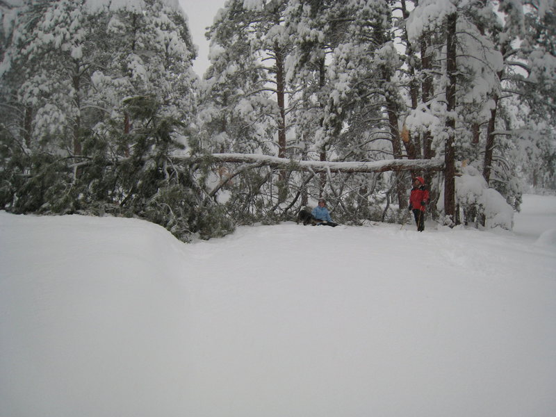 Rock Climbing Photo: This tree fell across my driveway on 17 Apr 09.