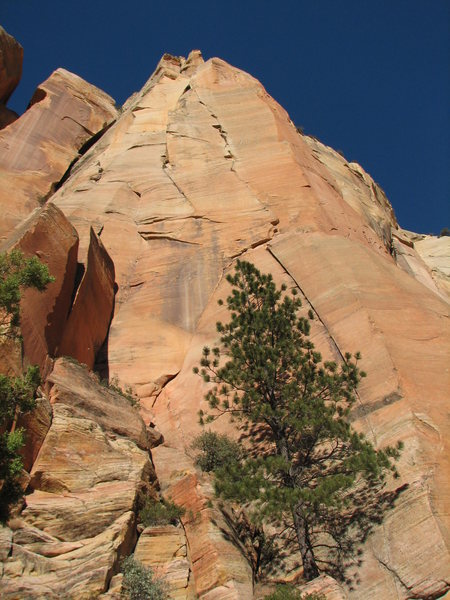 Rock Climbing Photo: Looking up from our plush bivy for 100 at the beau...