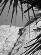 Rock Climbing Photo: Don't fall down low!  This yucca wouldn't feel too...