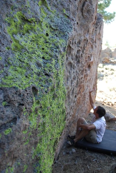 he took a lichen to the rock