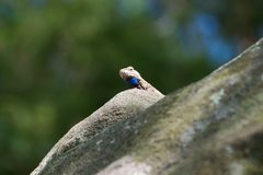 Rock Climbing Photo: Local guarding the top out of the Scoop.  He didn'...