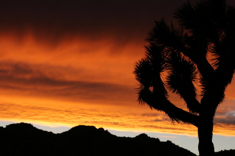 Another spectacular sunset in Joshua Tree, CA