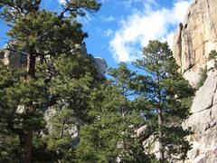 Rock Climbing Photo: George peaking through the trees.