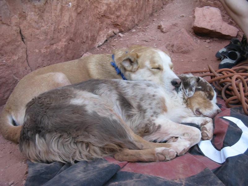 Rock Climbing Photo: The doggies....