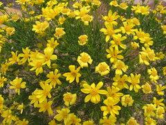 Rock Climbing Photo: Spring in the desert.