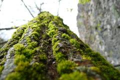 Rock Climbing Photo: Spring 2009. Photo: Angus Bohanon.