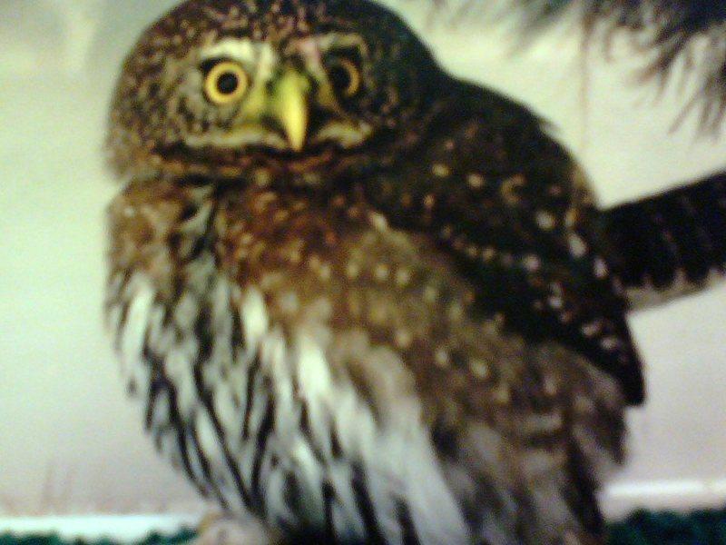 Rock Climbing Photo: owl
