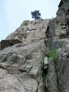 Rock Climbing Photo: Looking up to the pine tree from the base of the r...
