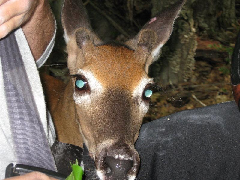 Jon Garlough and Jay Denver encounter a friendly deer leaving The Den