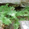 Nice ferns at Y.B.