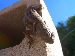 Rock Climbing Photo: Lizard