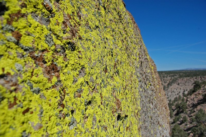 Vibrant lichen on the rim of the gorge