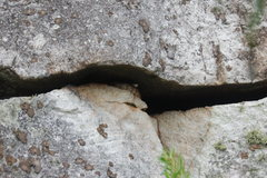 Rock Climbing Photo: One of the locals; this copperhead is in a crack I...