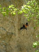 Rock Climbing Photo: Jamie throwin down street knowledge.