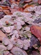 Rock Climbing Photo: fungi
