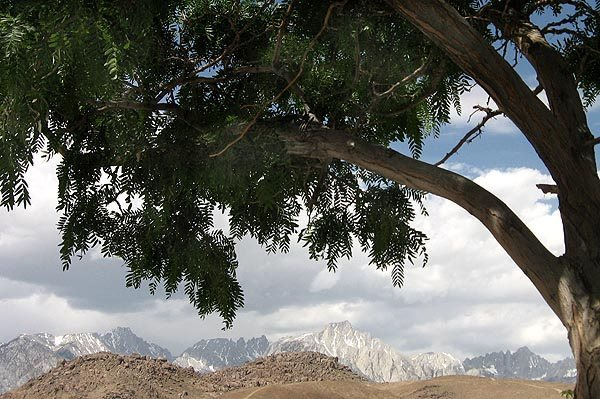 Sierra Crest from lower Tuttle Creek Campground.<br> Photo by Blitzo.