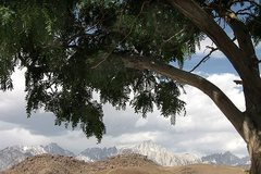 Rock Climbing Photo: Sierra Crest from lower Tuttle Creek Campground. P...