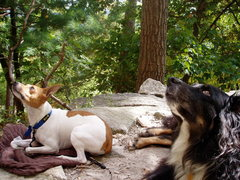 """Rock Climbing Photo: Dawso and Griff   """"what are they doing up the..."""