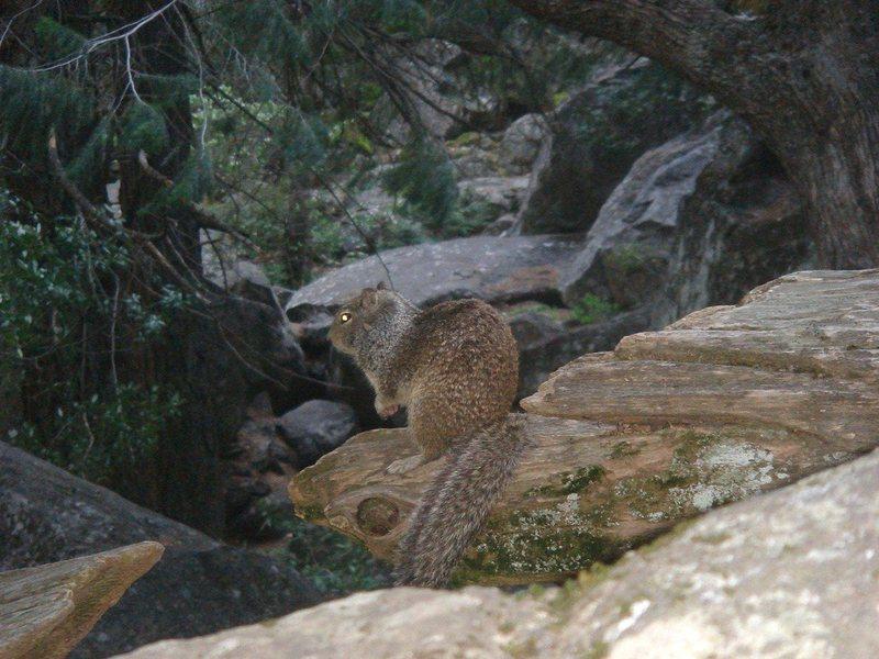 Rock Climbing Photo: Day 4 - Rocky posing near Lower Yosemite Falls.
