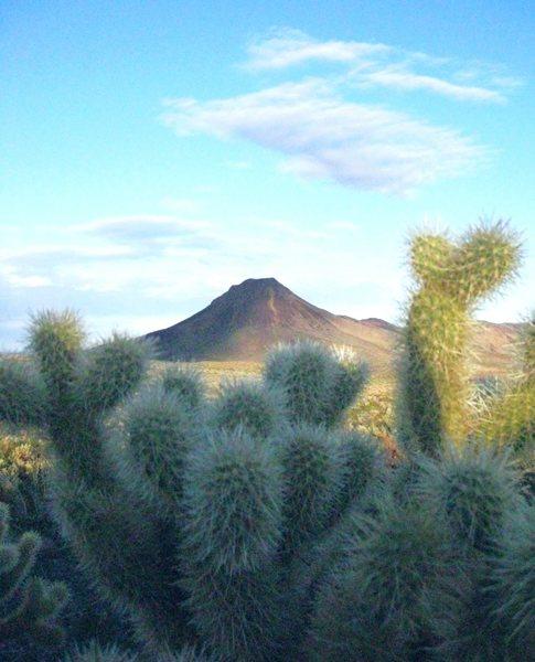 Frolicking in the Mojave Desert; never a dull moment.<br> <br> Taken Feb./09