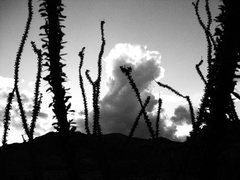 Rock Climbing Photo: Ocotillo, with cumulus congestus clouds looming.  ...