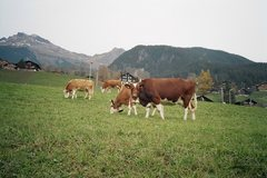 Rock Climbing Photo: Grindelwald Locals still need more cow bell?
