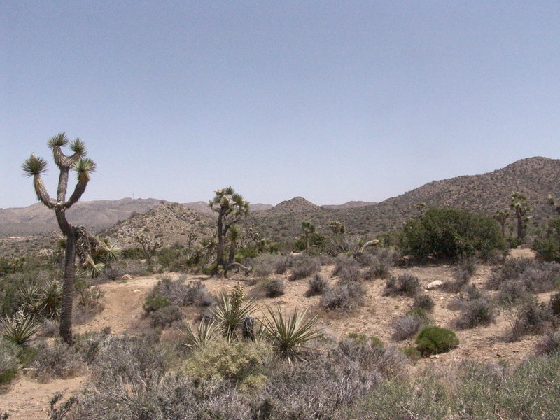 Rock Climbing Photo: Joshua Tree, California