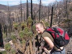 Rock Climbing Photo: Cuyamaca State Park, California