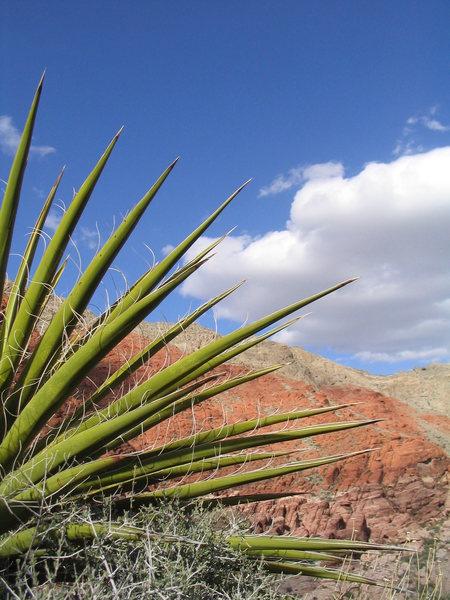 A pretty picture of Calico Basin.
