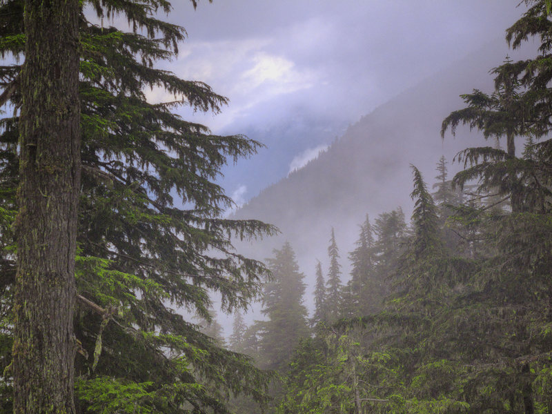 Rainy descent through the forests on Heliotrope Trail.