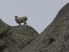 Rock Climbing Photo: And the king of the hill is: ...
