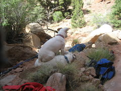 Rock Climbing Photo: The terriers waiting in comfort