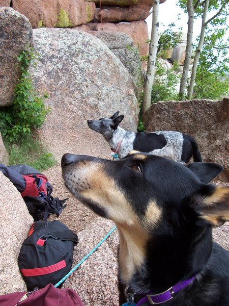 Rock Climbing Photo: Our dogs both intrigued at the path we send.
