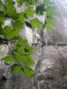 Rock Climbing Photo: Pulling into the good stance below the large flake...