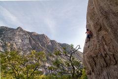 Rock Climbing Photo: more LCC climbing