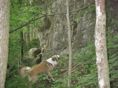 Rock Climbing Photo: Fia tree-ed these baby raccoons and would not stop...
