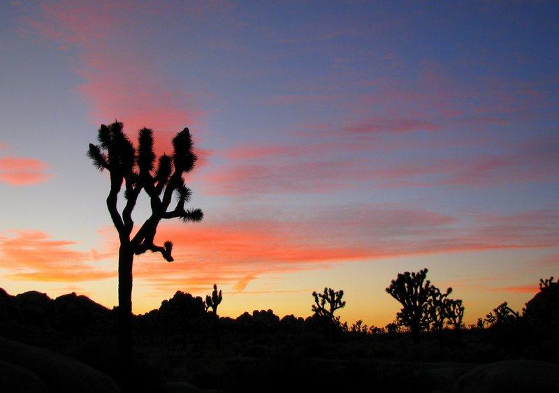 Rock Climbing Photo: jtree sunset