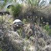 Desert Tortoise busting off the road at Red Rocks
