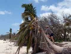 Rock Climbing Photo: Dean playing around on a palm tree.