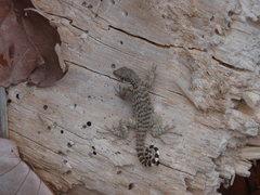 Rock Climbing Photo: More creatures.