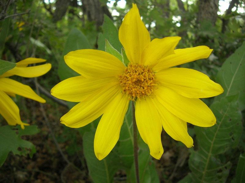 flower at the rim