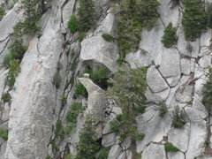 Rock Climbing Photo: Mountain goat posing for a photo.