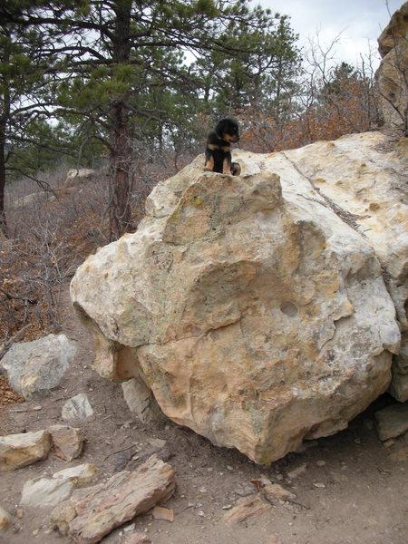 Rock Climbing Photo: my pup climbing with me at ute pass